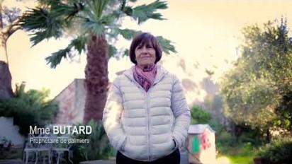 Vidéo testimoniale sur le traitement Tree Care par Syngenta