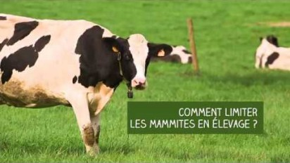 Témoignage en vidéo sur les bénéfices du Platinium, un médicament contre les mammites