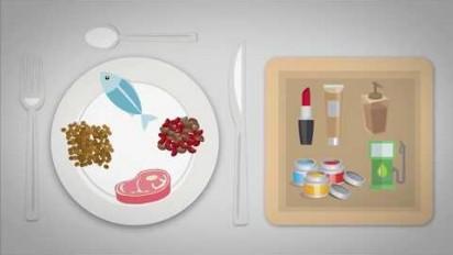 Animation 2D pour sensibiliser à la filière des huiles végétales