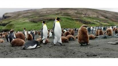 """Spot publicitaire sur les îles Kerguelen """"49° Sud Nature Australe"""""""