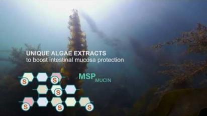 Présentation vidéo produit, Seagut Powder, solution naturelle pour le bien-être digestif des porcelets