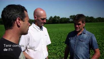Présentation vidéo du traitement antifongique SWITCH contre le sclérotinia du haricot vert