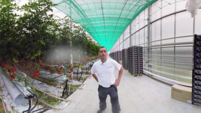 Vidéo 360 immersive au coeur de la production de tomates