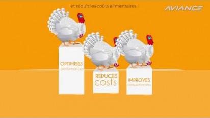 Animation 2D pédagogique de la solution AVIANCE pour le bien-être digestif des volailles