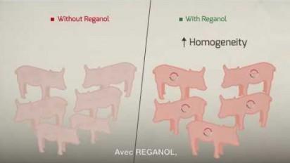 Motion Design 2D sur le procédé REGANOL, pour améliorer les performances de l'élevage